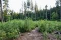 Las w okolicy żródełka
