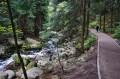 Ścieżka wzdłuż Łomnicy