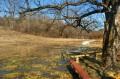 Ławka pod drzewem i mokradła