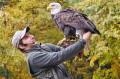Pokaz ptaków drapieżnych - Bielik amerykański (symbol USA)