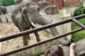 Karmimy słonia