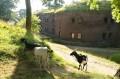 Forteczne kozy