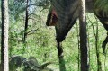 T-Rex przyczajony na triceratopsa