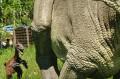 Deinonych i Iguanodon na dinościeżce