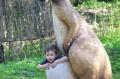 Kangurzyca z małym