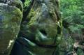 Głowa konia z kostkami cukru
