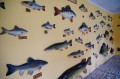 Ściana ryb