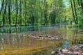 TOMASZÓW MAZOWIECKI - Rezerwat Niebieskie Źródła