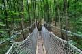 Most linowy na ścieżce przyrodniczej