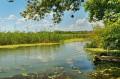 Zarośnięte Jezioro Cisańskie