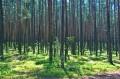 Las na ścieżce górnej