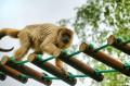 Małpka na drabince nad głowami ludzi