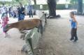 Pościg za kozą w minizoo