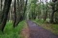 Leśny szlak do wydmy