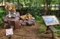 Pseudosafari - tygrysy na plastkowyh skałach