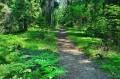 Szlak czerwony poza ścieżką przyrodniczą