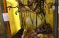 Szkielety dinów