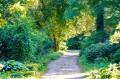 Ścieżka w części leśnej