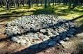 GRZYBNICA - Kamienne kręgi