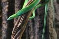 Jeden z ciekawszych węży