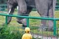 Podziwiamy słonia