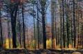 Las widziany z wyciągu