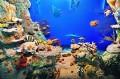 Diorama rafy koralowej