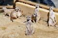 BOJNICE - Ogród zoologiczny
