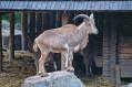 KRAKÓW - Zoo