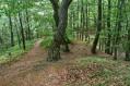 SŁONNE - ZASANIE - Rezerwat przyrody Kozigarb