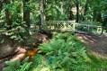 LIPNO - Park leśny i ogród dendrologiczny