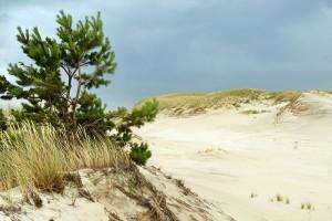 SŁOWIŃSKI PARK NARODOWY - Ruchoma wydma  Czołpińska