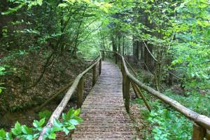 BYKOWCE - Rezerwat przyrodniczy Polanki