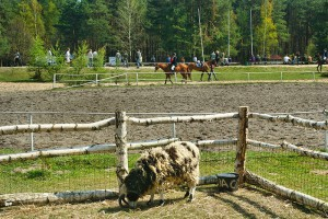 ZABAJKA - Stadnina koni