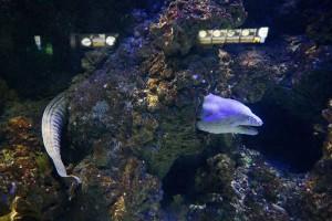 GDYNIA - Akwarium Gdyńskie