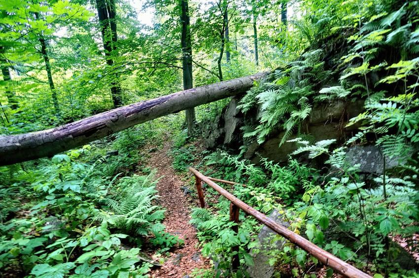 Drzewo na ścieżce dookoła ruin