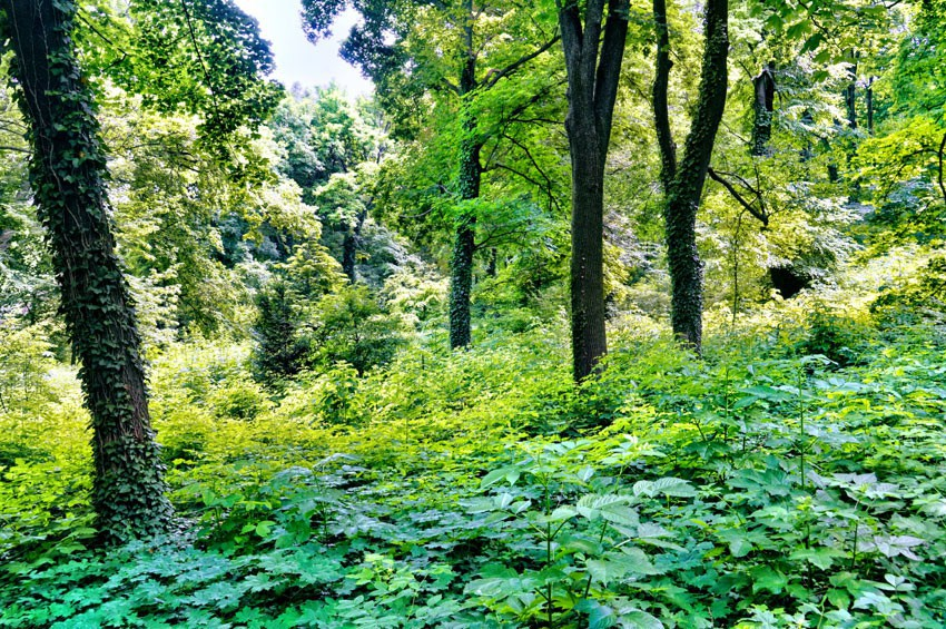 PANNONHALMA - Arboretum i ogród zielny