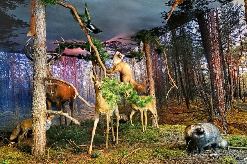 SMOŁDZINO - Muzeum Przyrodnicze