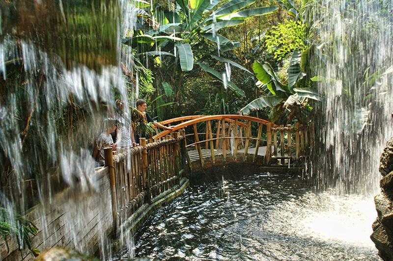 Las tropikalny w Zielonej Piramidzie