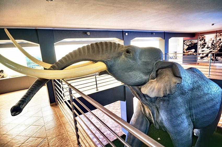 Spichlerz ze słoniem